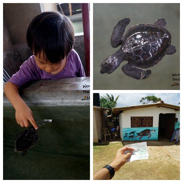 可以近距離接觸小海龜。攝影:吳成夫/Bruce