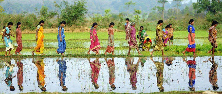 氣候變遷衝擊亞洲地區,印度稻米產量首當其衝。(Photo by Trocaire...