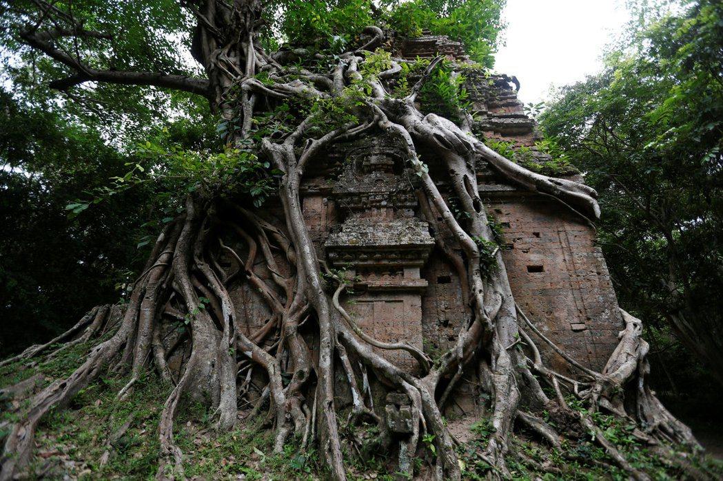 柬埔寨三波坡雷古寺廟區本月初列名聯合國教科文組織的世界文化遺產。(路透)
