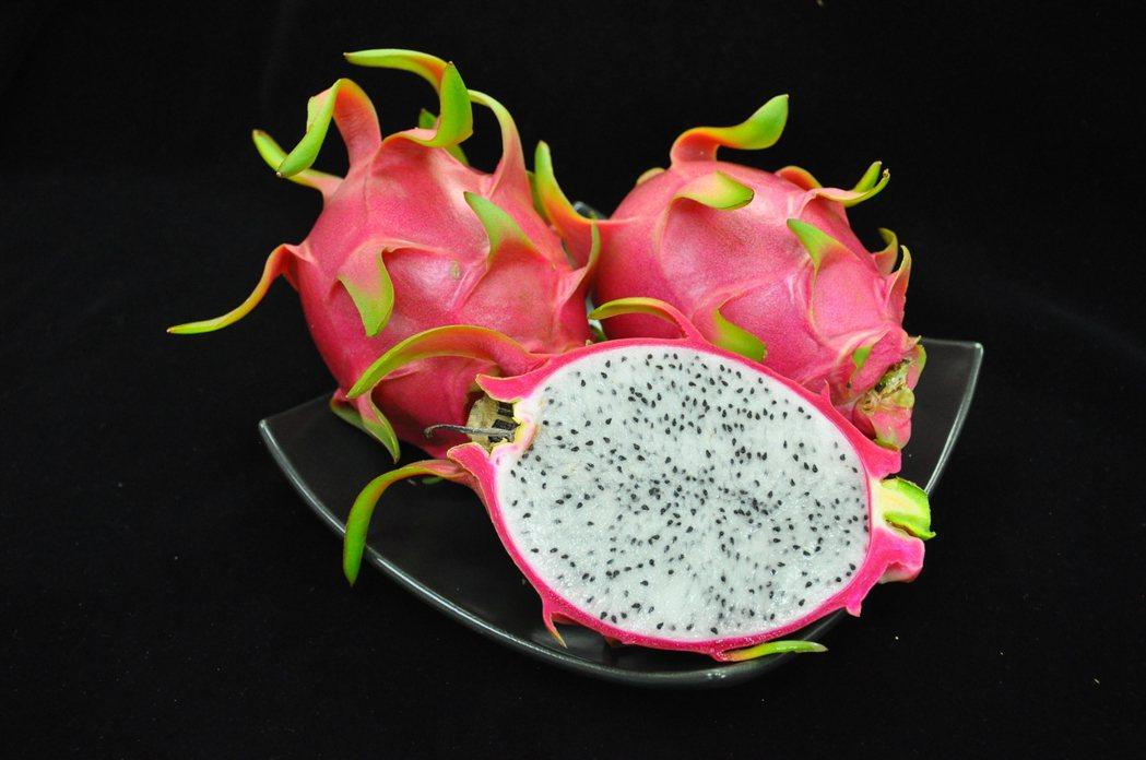 火龍果白肉種口感清甜爽脆。農委會台南場/提供