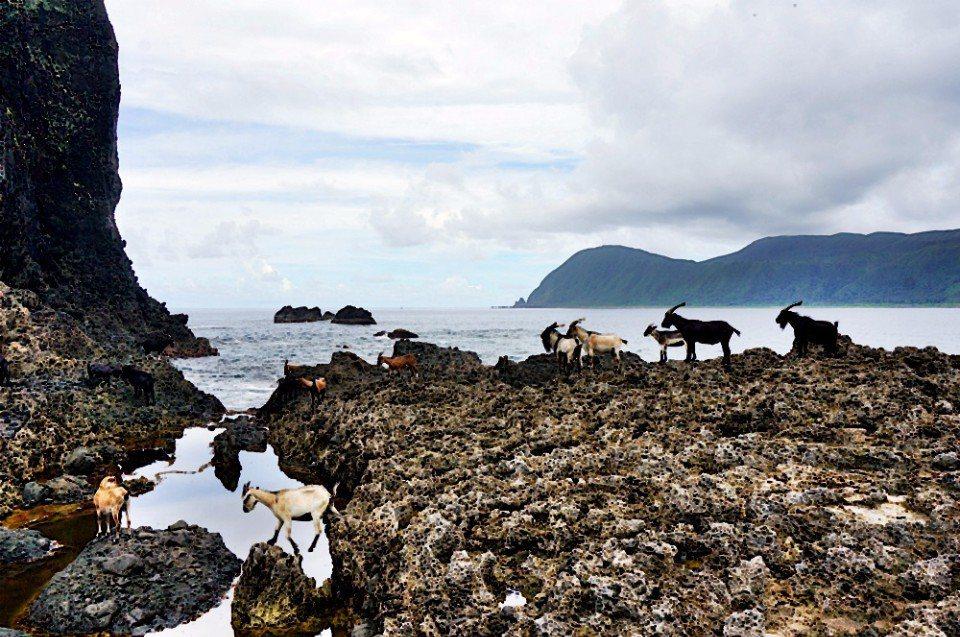 情人洞一旁可見不少羊隻攀爬在岩壁上。(林郁姍/攝)