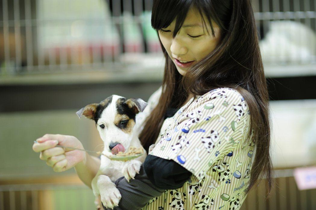 北市府市政會議昨通過「台北市動物之家服務收費標準」,最快8月上路。 圖/北市動保...