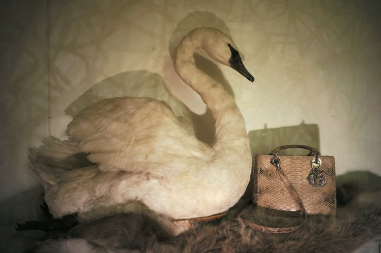 攝影師南戈丁2010年作品「Swan, with Dior bag」氛圍獨特。圖...