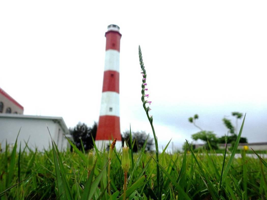 高美燈塔。 圖/航港局提供