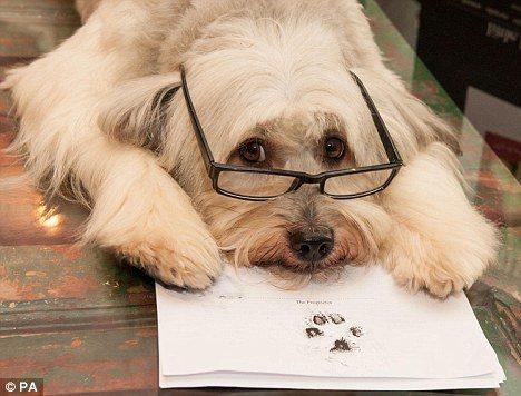 派西在新書合約上蓋下掌印,完成「簽約」。圖/摘自Daily Mail