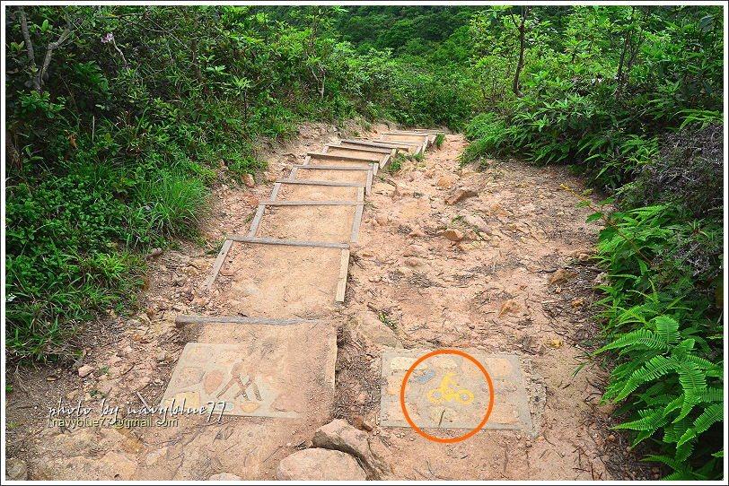 ↑過龍脊觀景台之後步道陡降,階梯上除了人行圖示,竟然還有自行車,原來龍脊步道也可...