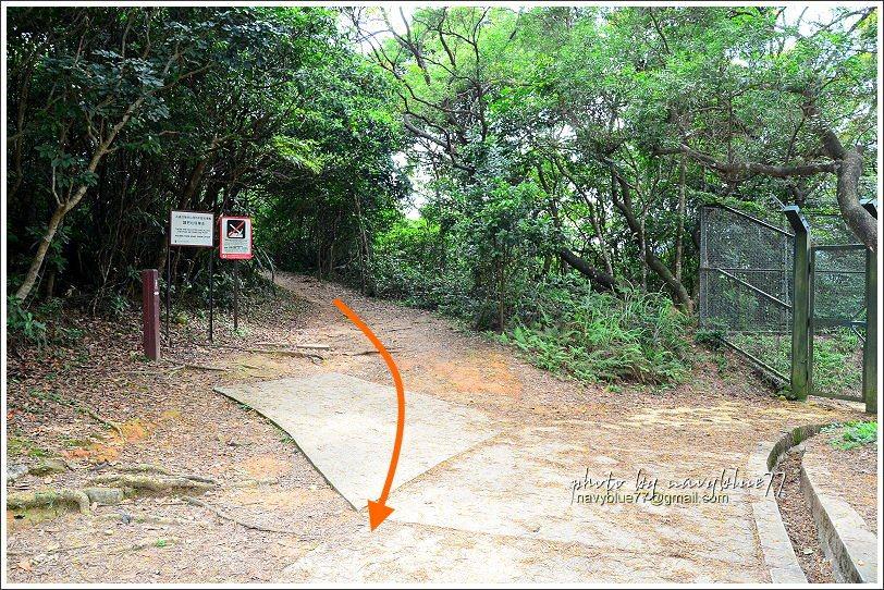 ↑步道至此接水泥產道,改為下坡。