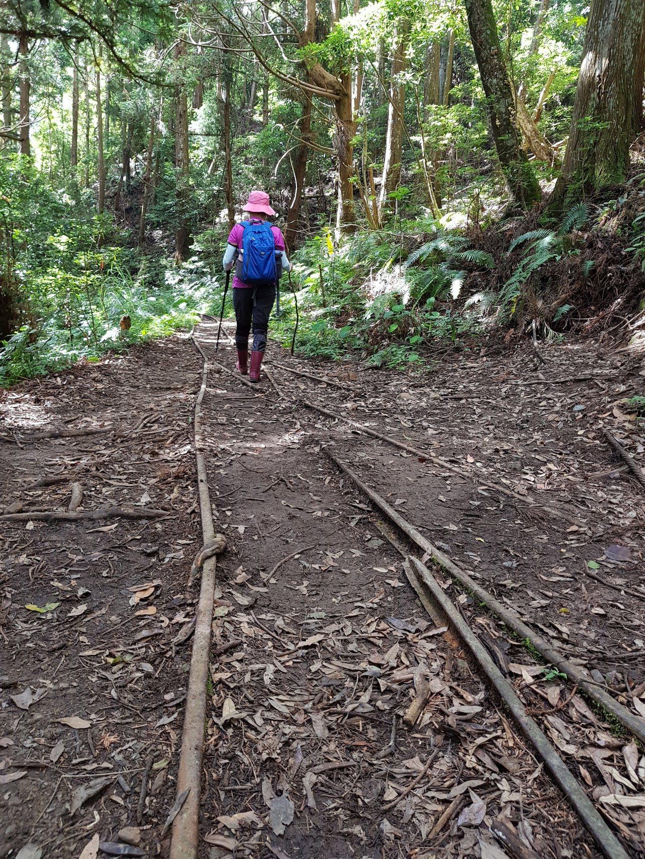 走在廢棄的台車軌道,感受林間鐵道風情。記者黃瑞典/攝影