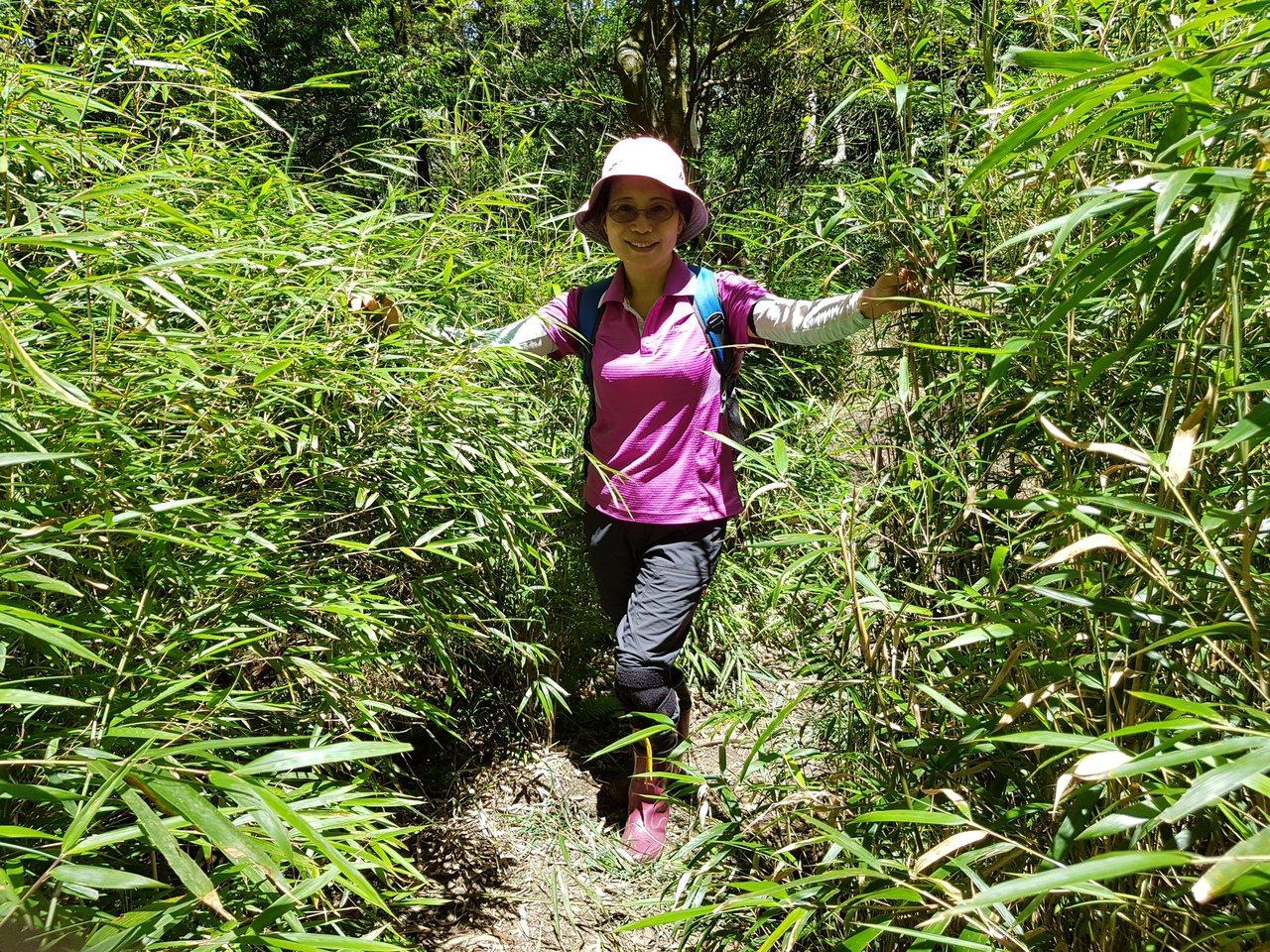 加里山林相豐富,除了柳山林,還有大片的箭竹林。記者黃瑞典/攝影