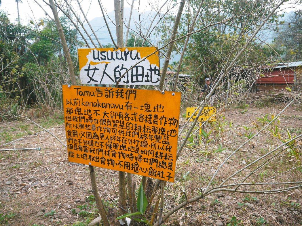 部落女性耕作智慧讓農地四季都有作物。 記者洪欣慈/攝影