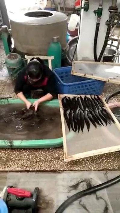 製造假髮過程繁複,需經過清洗、煮沸消毒、排髮、壓模等步驟。 圖/神奇假髮提供