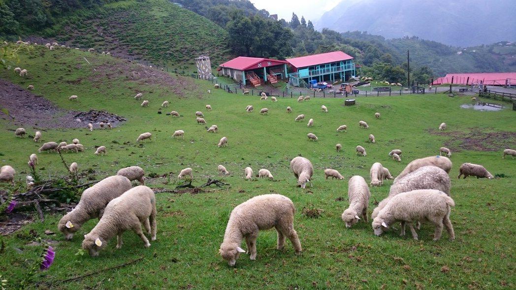 圖/清境農場提供