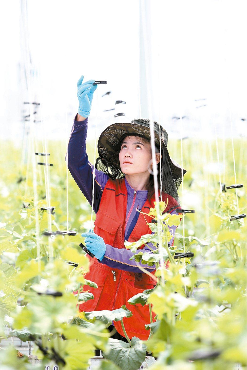 seedream農場現在是三個人管理,未來目標是降至一個人。 記者蘇健忠/攝影