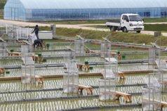 南韓農村研究天公伯 資料5秒抓一次