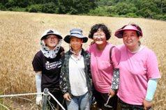 南韓KWPA踏遍農村 她們苦尋「老奶奶的種子」
