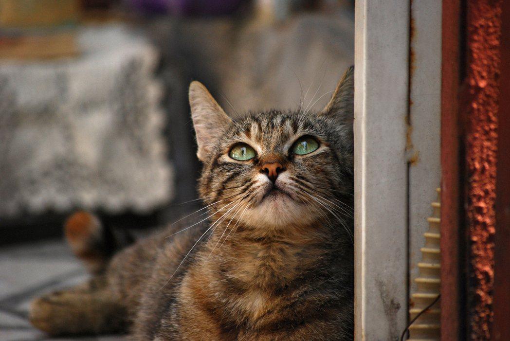示意圖。日本一位婦女去年遭貓咬傷後,卻罹患以蜱蟲為媒介傳染的的病毒傳染病,10天...