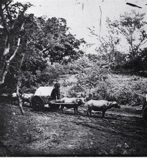 John Thomson 1871年拍攝的南部地區原住民用的板輪牛車。圖/國立臺...