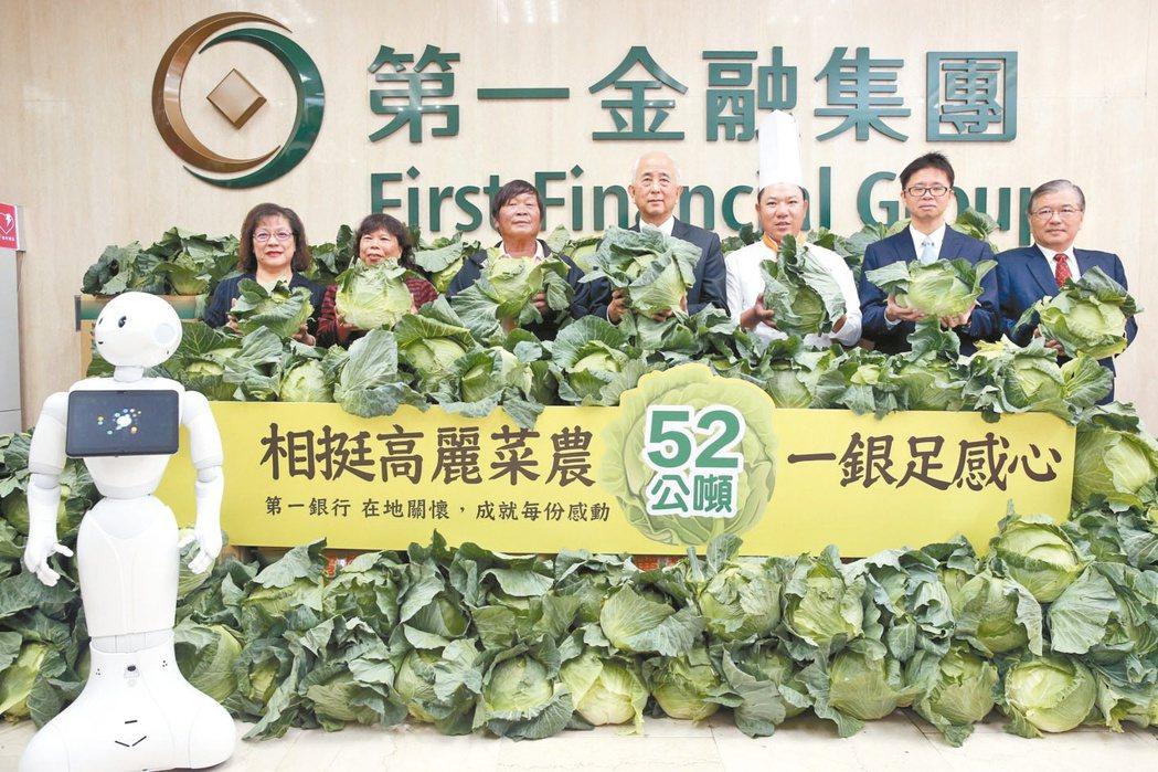 年初第一銀行購買52公噸高麗菜搶救菜農,現場堆疊高麗菜分送給客戶、員工,第一金控...