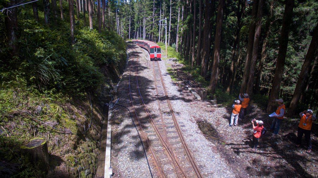 阿里山森鐵以之字型上山稱為火車碰壁。 圖/賴國華提供
