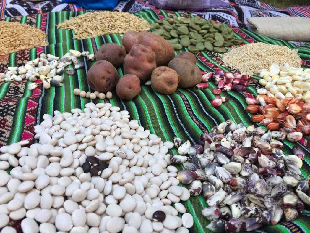 對農民來說,種子是一切。記者蔣宗裕/攝影