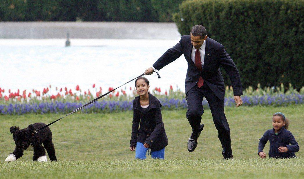 美國前總統歐巴馬2009年帶著寵物狗小波亮相時,被小波拖著跑差點跌倒。 美聯社