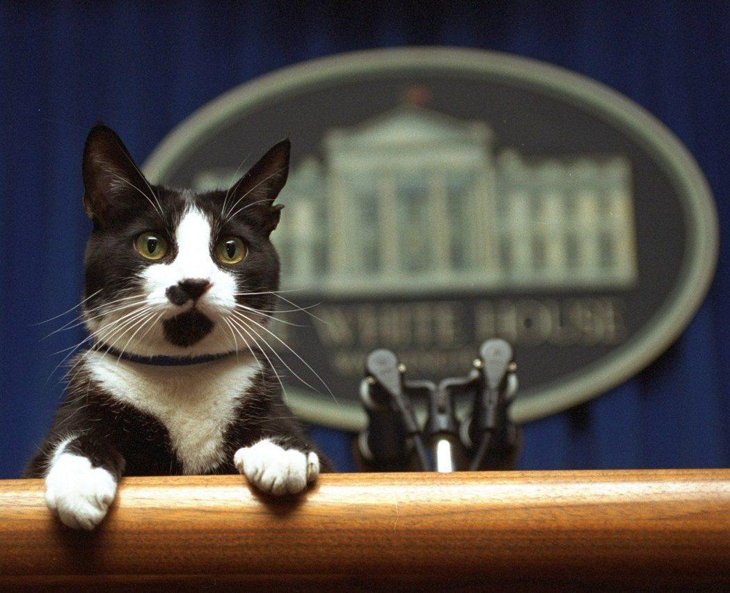 美國總統川普上任以來,白宮中仍有一個「重要職位」空缺。這就是多個「第一家庭」飼養...