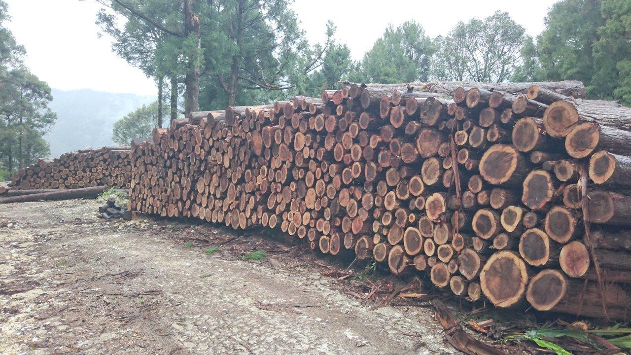 柳杉廣泛用於木質家具,是未來林業局推廣國產材的重點項目。圖/羅東林管處提供