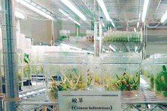 農業突圍 台灣從「南向」找機會