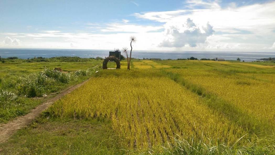 花蓮豐濱石梯坪的水梯田是找回傳統、友善農作的典範。記者董俞佳/攝影