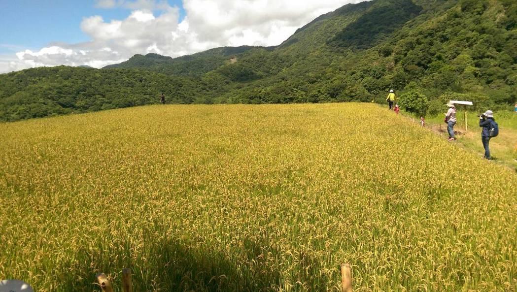 花蓮新社復興部落的友善農作串聯高山與海岸,成為一個生態綠帶,孕育出生物多樣性。記...