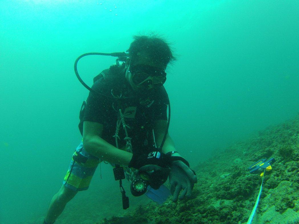 清大研究團隊在海中拍攝軟絲體色變化過程。 圖/清大提供