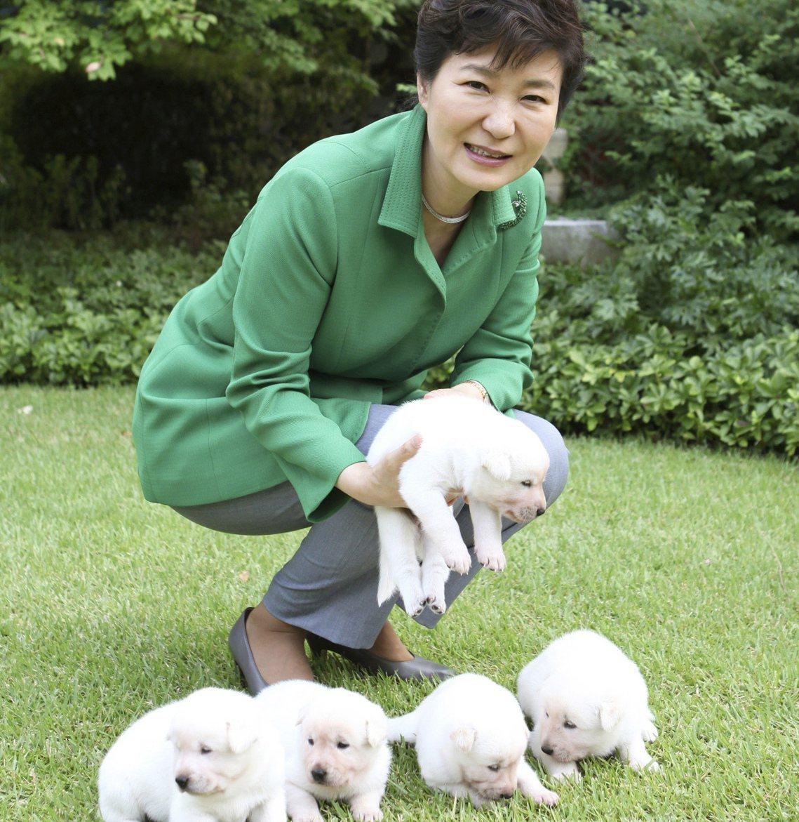 「我們祝福托里,希望牠的青瓦台生活一切都好——至少不要像前總統朴槿惠的9隻忠犬一...