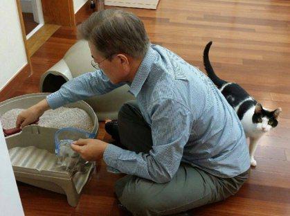讓文總統為其鏟屎清貓沙而轟動網路的小貓「晶晶」 圖/文在寅官網