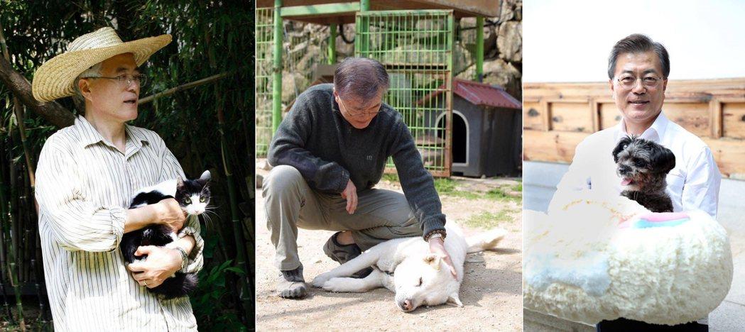 文在寅的貓狗們:晶晶貓、馬魯狗、托里米克斯。 圖/文在寅官網