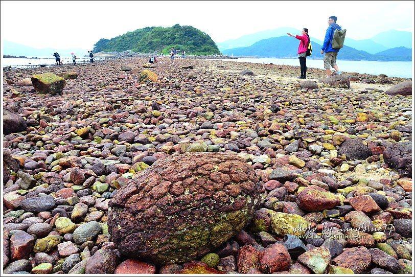 ↑香港道地小吃--菠蘿包變成了大石頭。它們其實是石英二長岩,受到不同程度的風化侵...