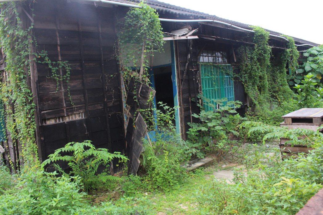 嘉義市政府將嘉義舊監宿舍群轉型為木文化工作聚落,4間老房屋下個月展開二期工程。 ...
