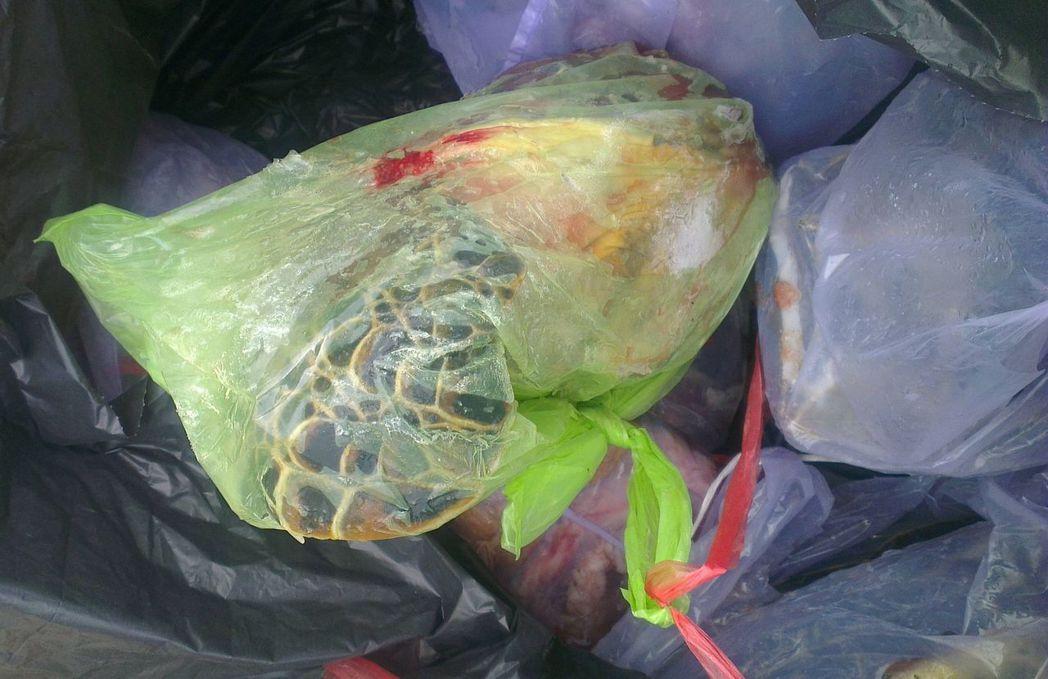 澎湖三名消防隊員涉嫌買綠蠵龜食用,有人拍下已肢解的綠蠵龜照片,上傳網路引發軒然大...