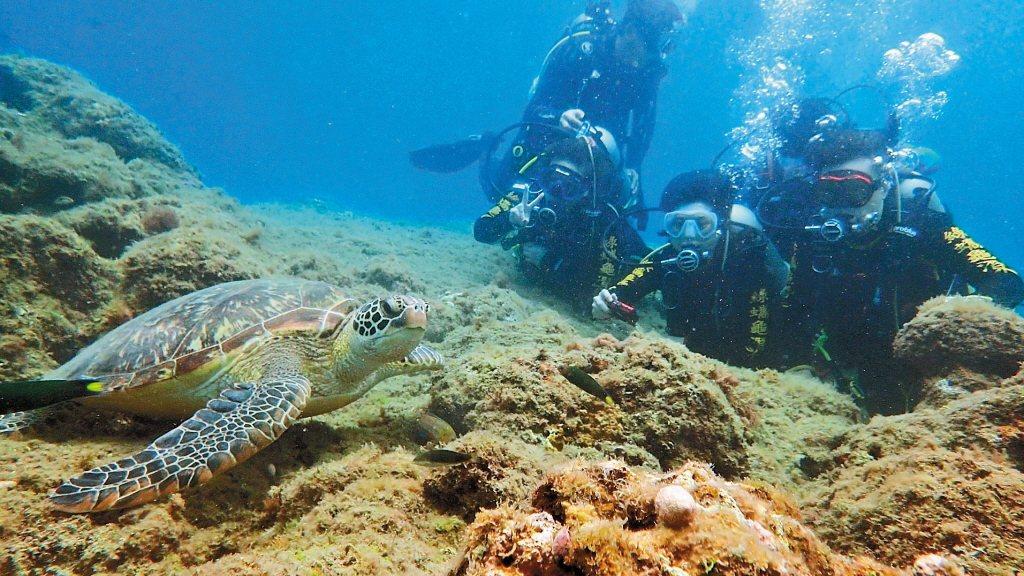 屏東離島小琉球因為海龜爆紅,近年成為觀光勝地。 圖/讀者提供