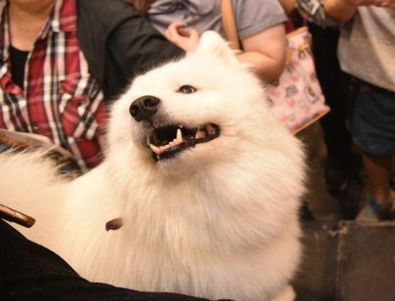 考術科需要自備模特犬。報系資料照