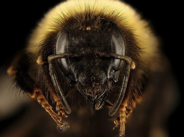 (首圖來源:Flickr/USGS Bee Inventory and Moni...