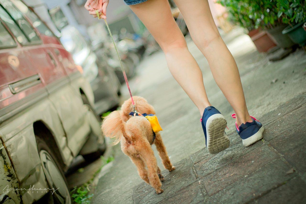 訓犬師建議飼主,帶狗狗去散步,不是去「行軍」,應該讓狗狗做一隻快樂的狗狗。圖/陳...
