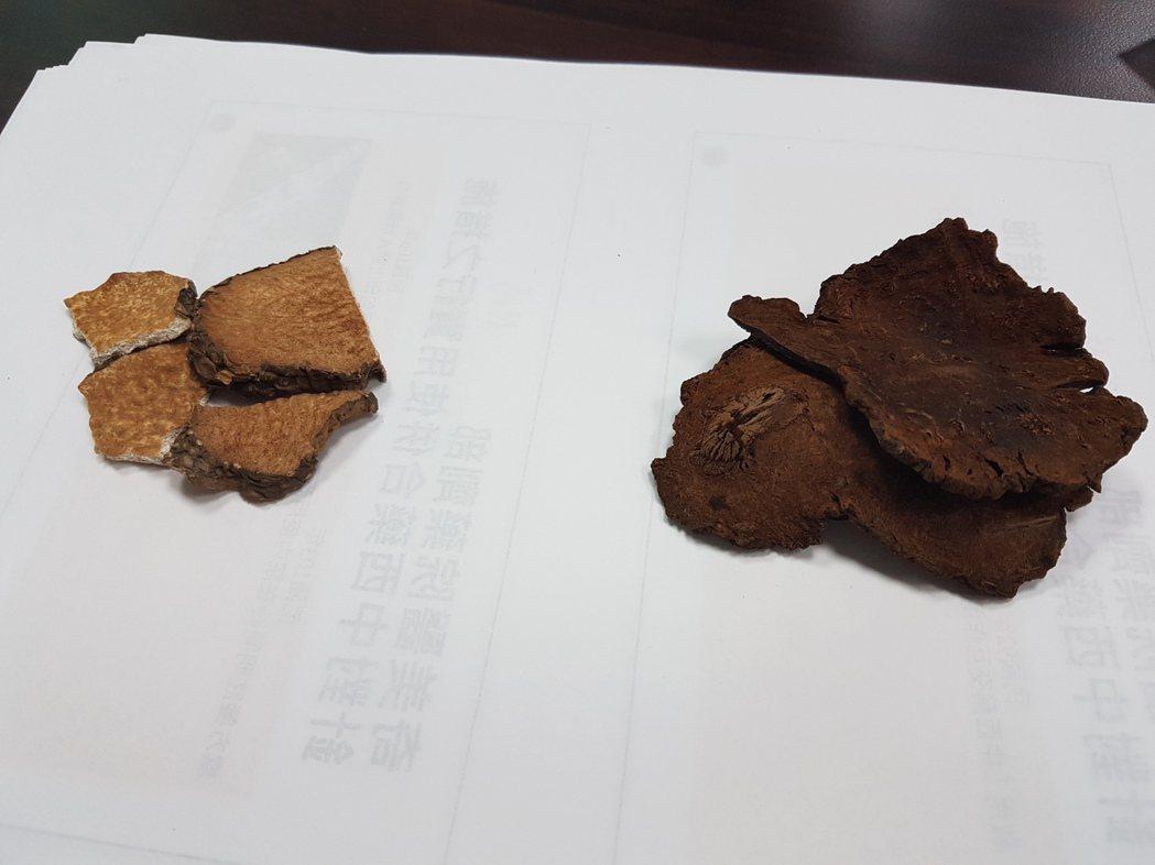 中藥當中的黃藥子(左)與何首烏在生鮮時看來相似,容易被誤用,一旦大量使用黃藥子可...