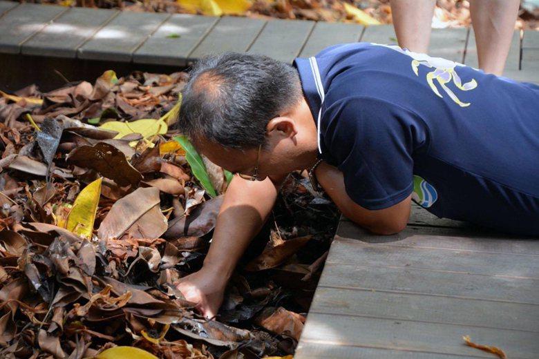 這個禿頭的阿伯趴在地上做甚麼?是身體不適路倒還在挖贓物?事實上他正在收集螞蟻樣本...