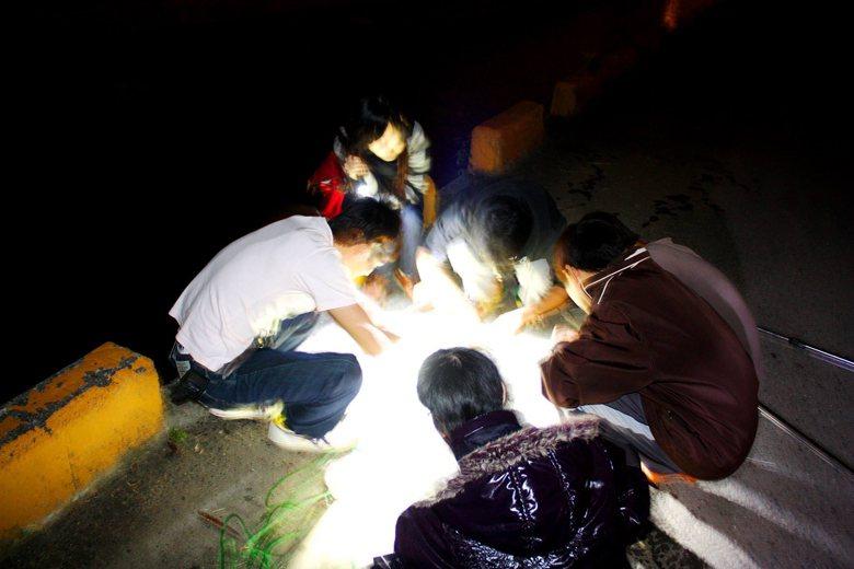 這群年輕人半夜聚賭嗎?事實上他們正在進行夜間生物研究。 攝影/蘇楷攝