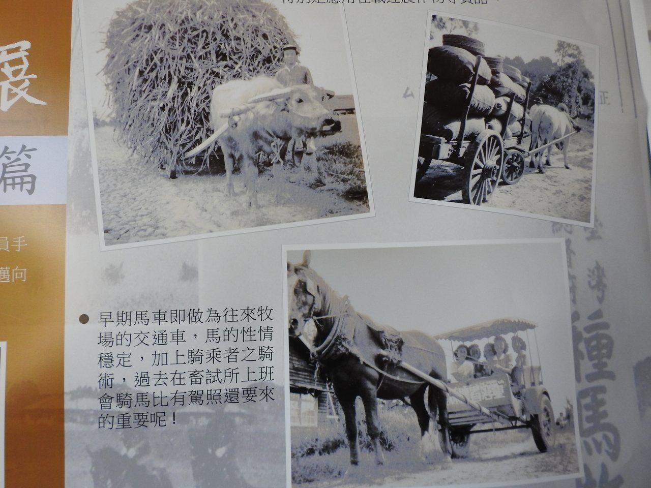 新化牧場老照片展,可看出早年以馬、牛車為主要代步工具。記者吳淑玲/翻攝