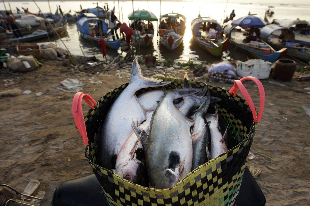 自從砂石開採活動影響海洋生態後,柬埔寨的魚蟹的捕獲量不斷下降。 圖/美聯社