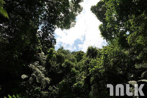 ▲抬頭望,天空也被樹木包圍。