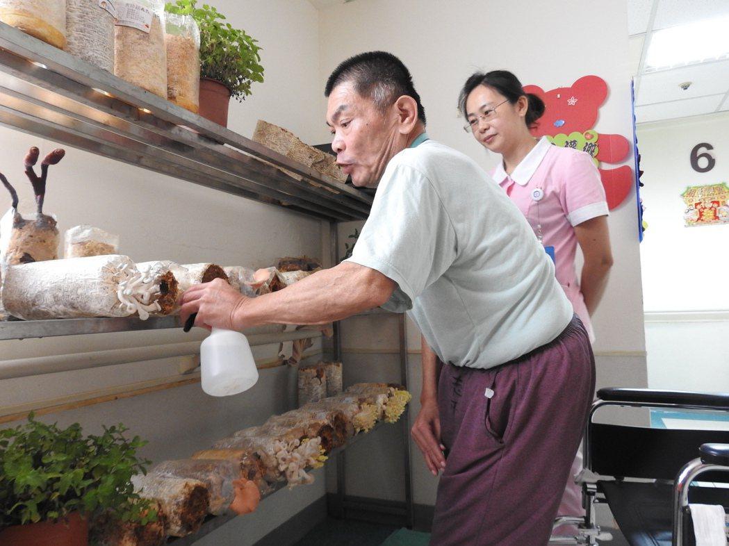 埔基護理之家還有間香菇寮,這是罹患憂鬱症且不良於行的「阿河叔」的種菇小天地。 記...