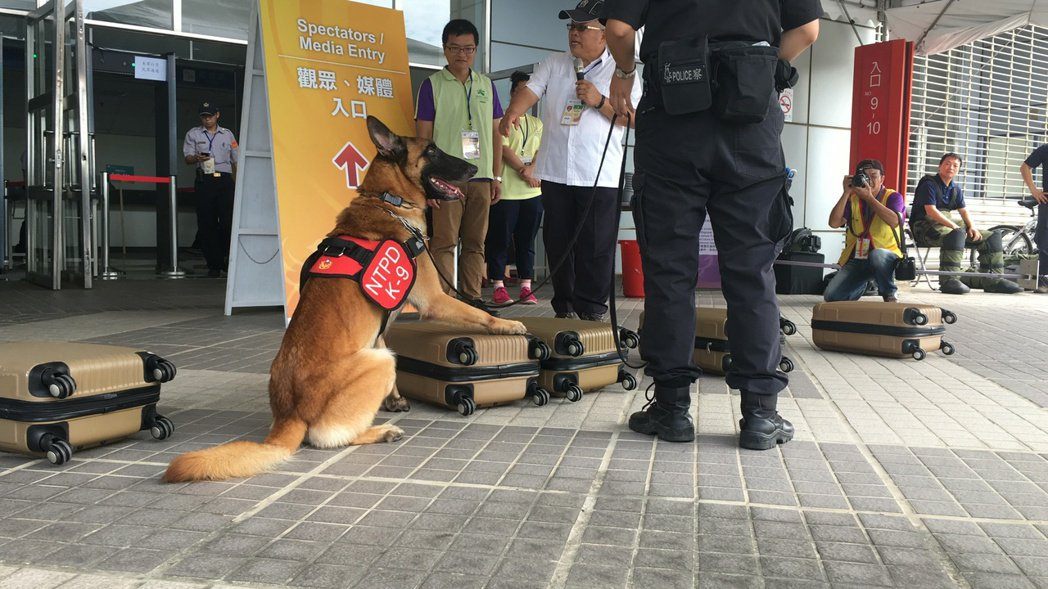 新北市警犬隊實施偵檢,可找出爆裂物及毒品,為世大運做準備。 記者陳妍霖/攝影