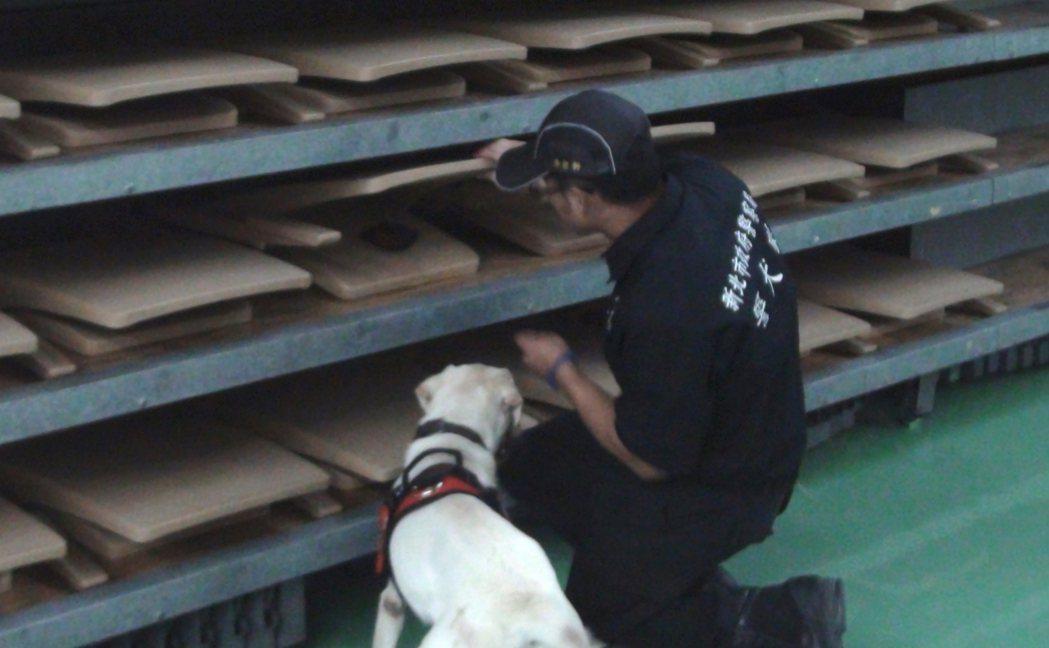 今年7月底,新北市警犬隊在世大運比賽場館的新莊體育館,進行場館安檢模擬訓練,偵爆...